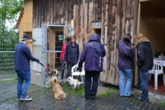 HundeMenschTreffen-2014-10