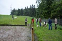 HundeMenschTreffen-2014-13