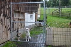HundeMenschTreffen-2014-3