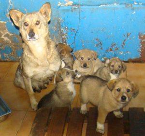 hundemutter-pallady